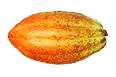 Criollo kakaoböna